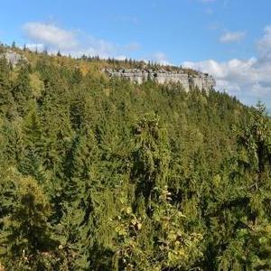 Okolice Kudowy Zdrój widok na rozległy las