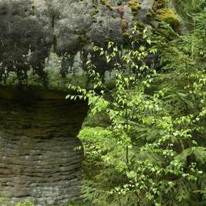Okolice Kudowy Zdrój skałka w kształcie grzyba